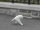 creepy picture of running cat