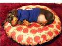 Pizza with extra sausage #dog