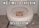No time to explain #cat #toilet