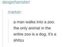 Only one animal in the zoo #shitzu #dog