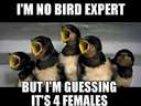 Im no bird expert, but #male #female