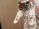 A static cat