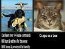 Compare cats to dogs