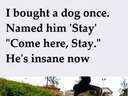 I bought a dog once and named him Stay