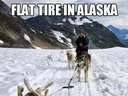 A flat tire in Alaska #dog