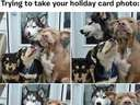 Trying to take your holiday card photo