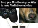 Every year 10 million dogs are killed