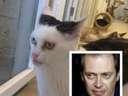 Steve Buscemis cat