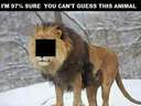97% cant guess this animal!