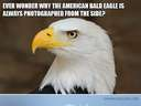 Ever wonder why the American Bald Eagle is always photographed from the side
