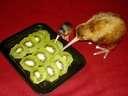 Kiwis eating Kiwis