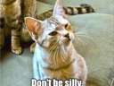 dont be silly #cat