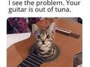Your guitar is out of tune #cat