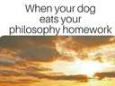 When your dog eats your philosophy homework