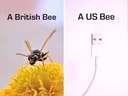British bee vs an American bee #USB