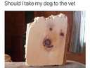 A dog's face in a plank