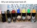 Why cat racing never took off