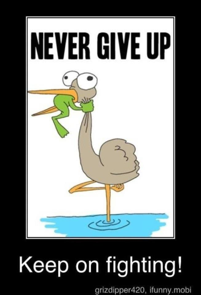 never give up frog fighting bird
